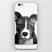 pit bull iPhone & iPod Skins featuring Pit Bull Dogs Lovers by Gooberella