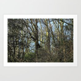 Wild Woods Art Print