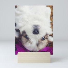 Shitzu Dog Mini Art Print