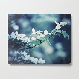Navy Blue White Nature Photography, Dogwood Tree Branches, Dark Flower Floral Branch, Botanical Blue Metal Print