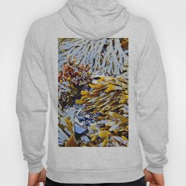Sea Plants of the St-Lawrence Hoody
