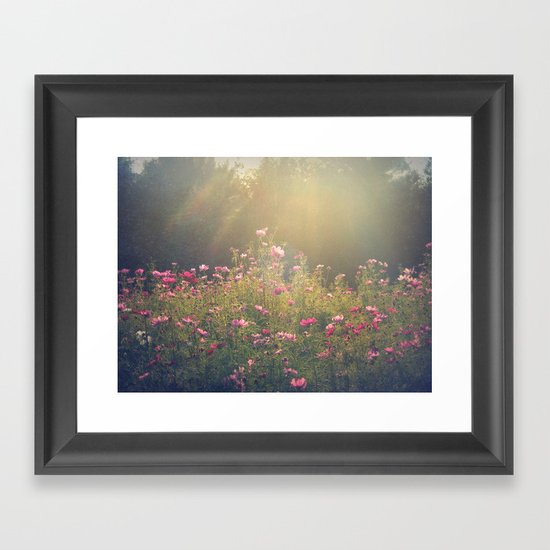 Cosmos in the Late Day Sun Framed Art Print
