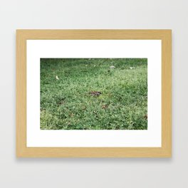 berb Framed Art Print