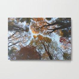 Forest Trail XLVII Metal Print