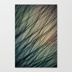 Feathered III Canvas Print