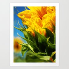 sunflower take 2. Art Print