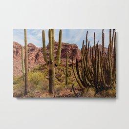 Cacti Variety Metal Print