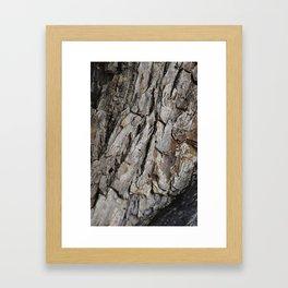 300 Year Old Tree Bark Framed Art Print