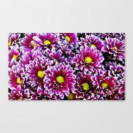 Purple, Pink, Dahlias Canvas Print
