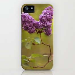 Blooming lilacs at sunset iPhone Case