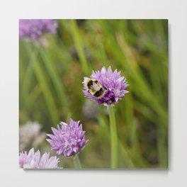 Bee on Chives Metal Print