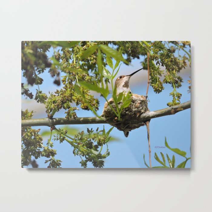 Hanging Out Over B Street Metal Print