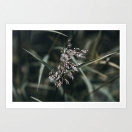 Wild Grass Plumes Nature Photo Art Print