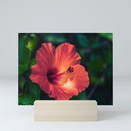 Hibiscus blooming Mini Art Print