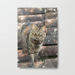 Striped Cat on a Roof Metal Print