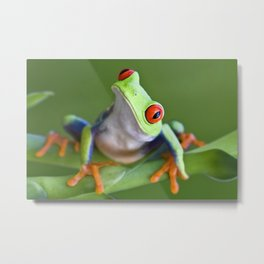 Red-eyed Tree Frog Metal Print