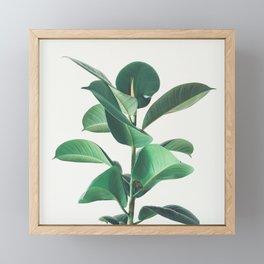 Rubber Fig Framed Mini Art Print