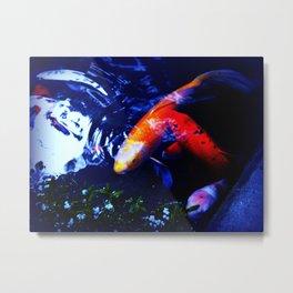 Koi Fish play coy Metal Print