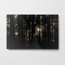 Sun between trees Metal Print