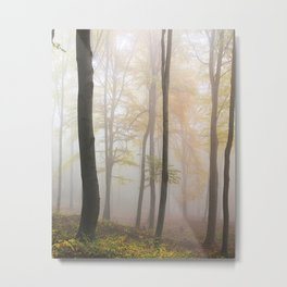 Forest ladscape Metal Print