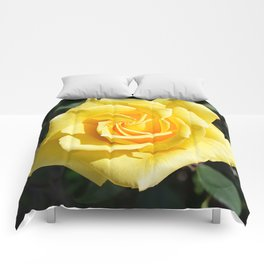 Yellow Rose for Mommy Comforters
