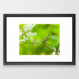 Perched Dragonfly  Framed Art Print