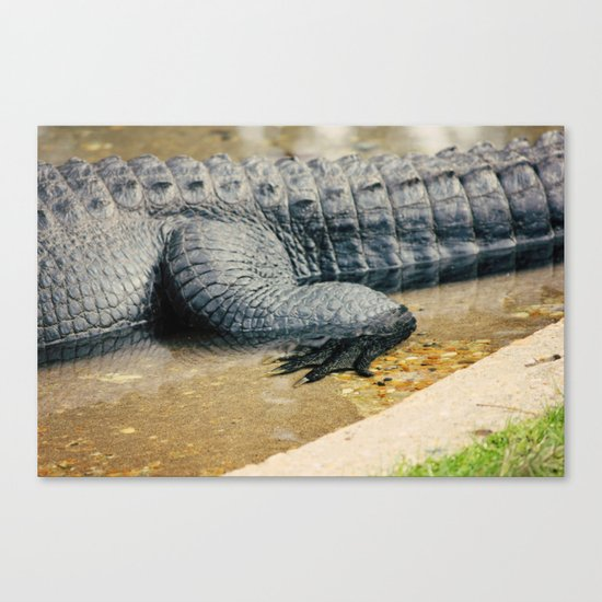 The Alligator Crawl Canvas Print