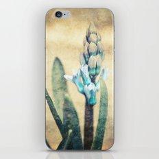 Hyacinth iPhone & iPod Skin