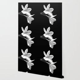 White Flowers Black Background Wallpaper