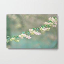 acqua di fiori di ciliegio Metal Print