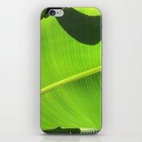 banana leaf iPhone & iPod Skins featuring Banana Leaf, Dark Shadows by Glenn Designs