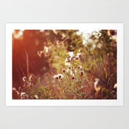 golden dandelions. Art Print