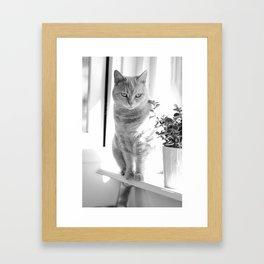 Esmeralda - On The Windowsill Framed Art Print