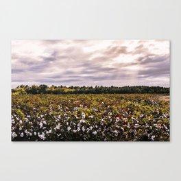 Cotton Field 23 Canvas Print