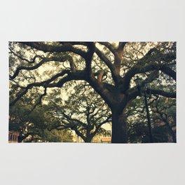 Savannah Live Oaks 2 Rug