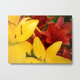 """A Gathering of Lilies"" - 4 [D4469~57] Metal Print"