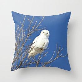 White Snowy Owl Blue Sky Throw Pillow