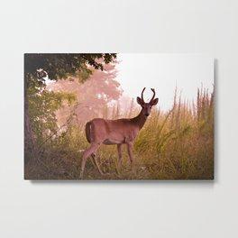 Good Morning Deer Metal Print