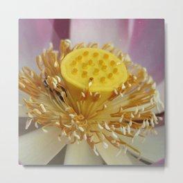 Blossom of Lotos - Lotus Flower Metal Print