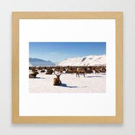 Elk Refuge Framed Art Print