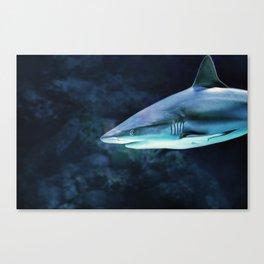 Gray Shark Head (Color) Canvas Print