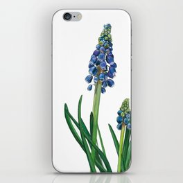 Grape hyacinth iPhone Skin