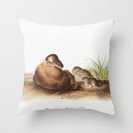 Black-footed Ferret (Putorius nigripes) from the viviparous quadrupeds of North America (1845) illus Throw Pillow