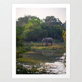 Elephant drinking on the green plains of Yala national park | Sri Lanka travel photography Art Print