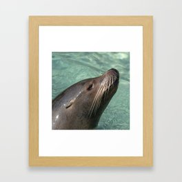 Calafornia Sea Lion square Framed Art Print