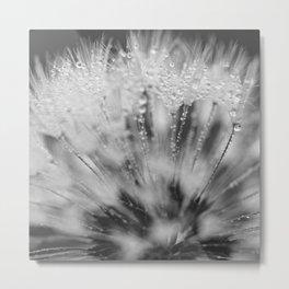 dewy dandelion Metal Print