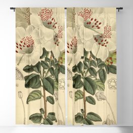 Rhododendron moupinense 141 8598 Blackout Curtain