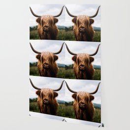 Scottish Highland Cattle in Scotland Portrait II Wallpaper