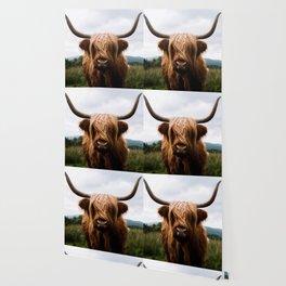 Scottish Highland Cattle in Scotland Portrait II Wallpaper