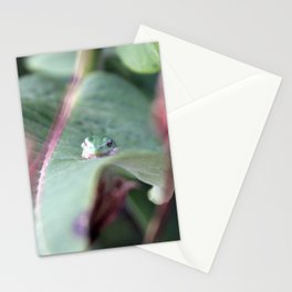Tree Frog Stationery Cards